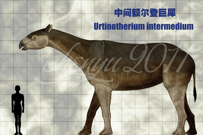 urtinotherium intermedium by sinammonite this large indricothere is known from the ulan gochu formation at