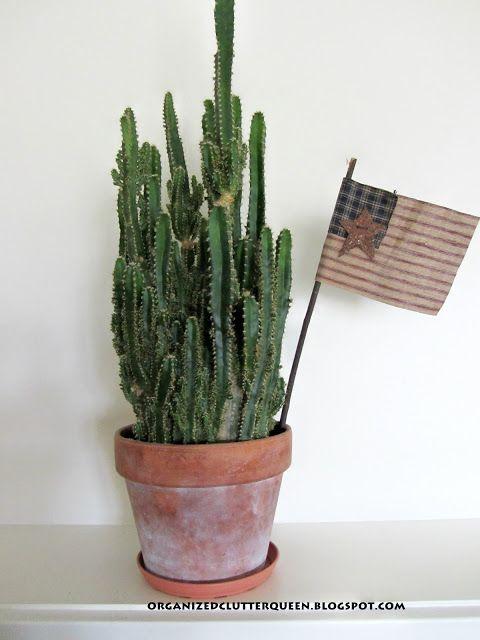 Rustic Cactus Planting