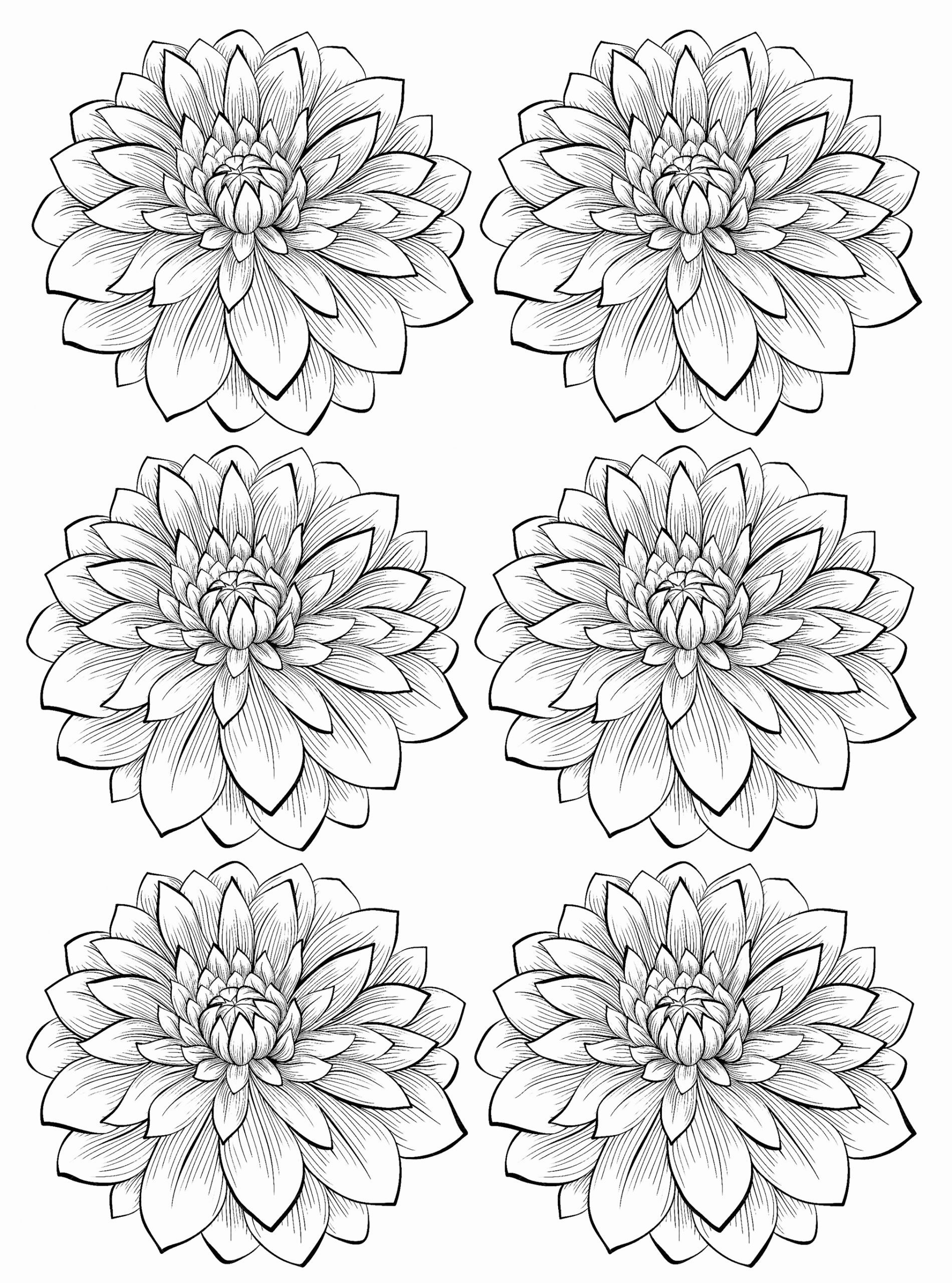 Adult Coloring Pages Flowers Inspirational Six Dahlia Flower