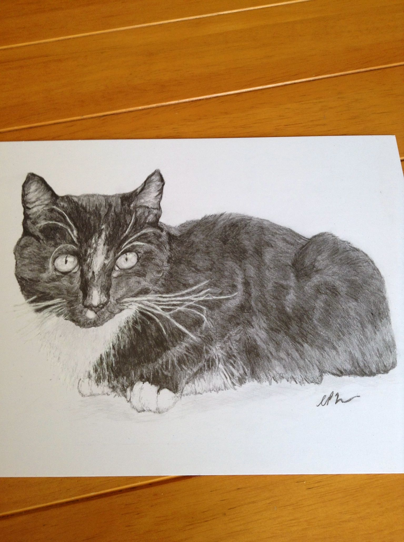 My first cat commission