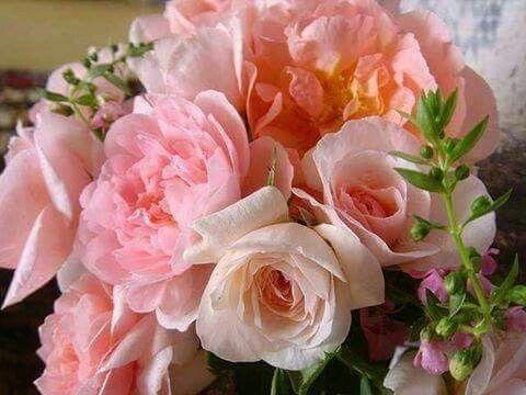 Pin von Andrea Tóth auf flowers | Pinterest