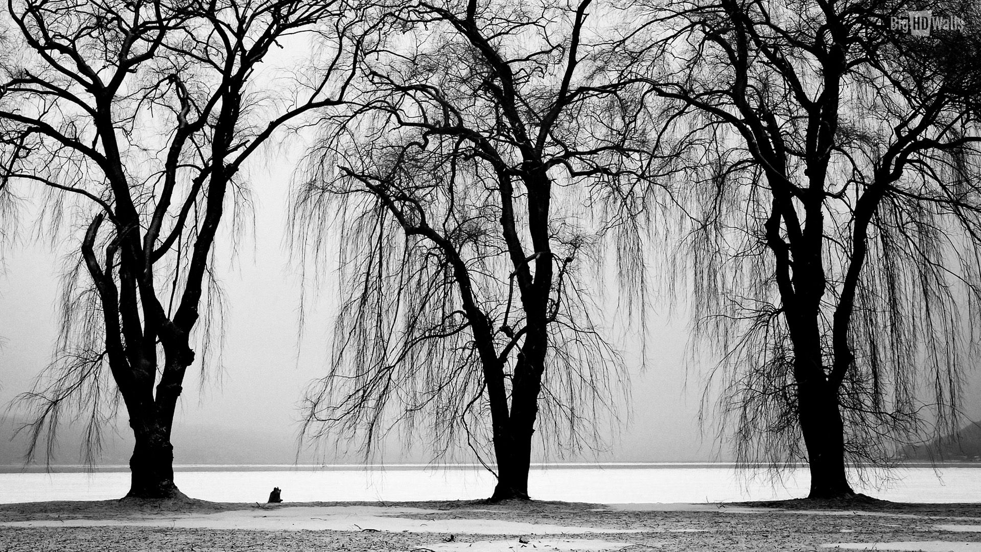 Tree black and white high resolution wallpapers