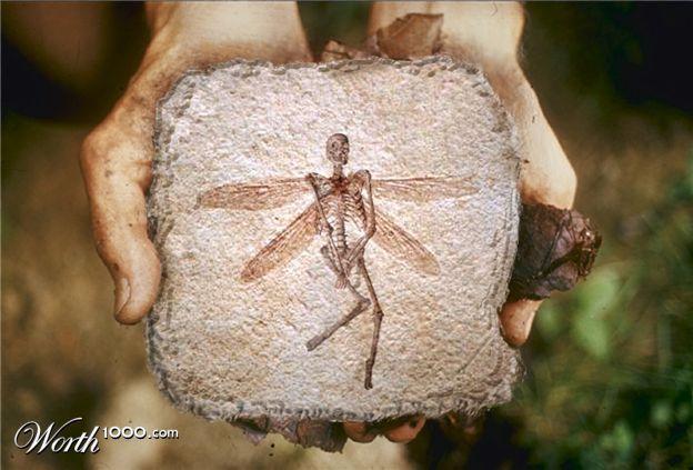 Отпечаток скелета феи-эльфа на камне