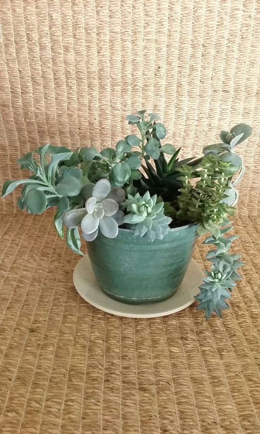 Succulents In Green Bioplanter From A Small Online