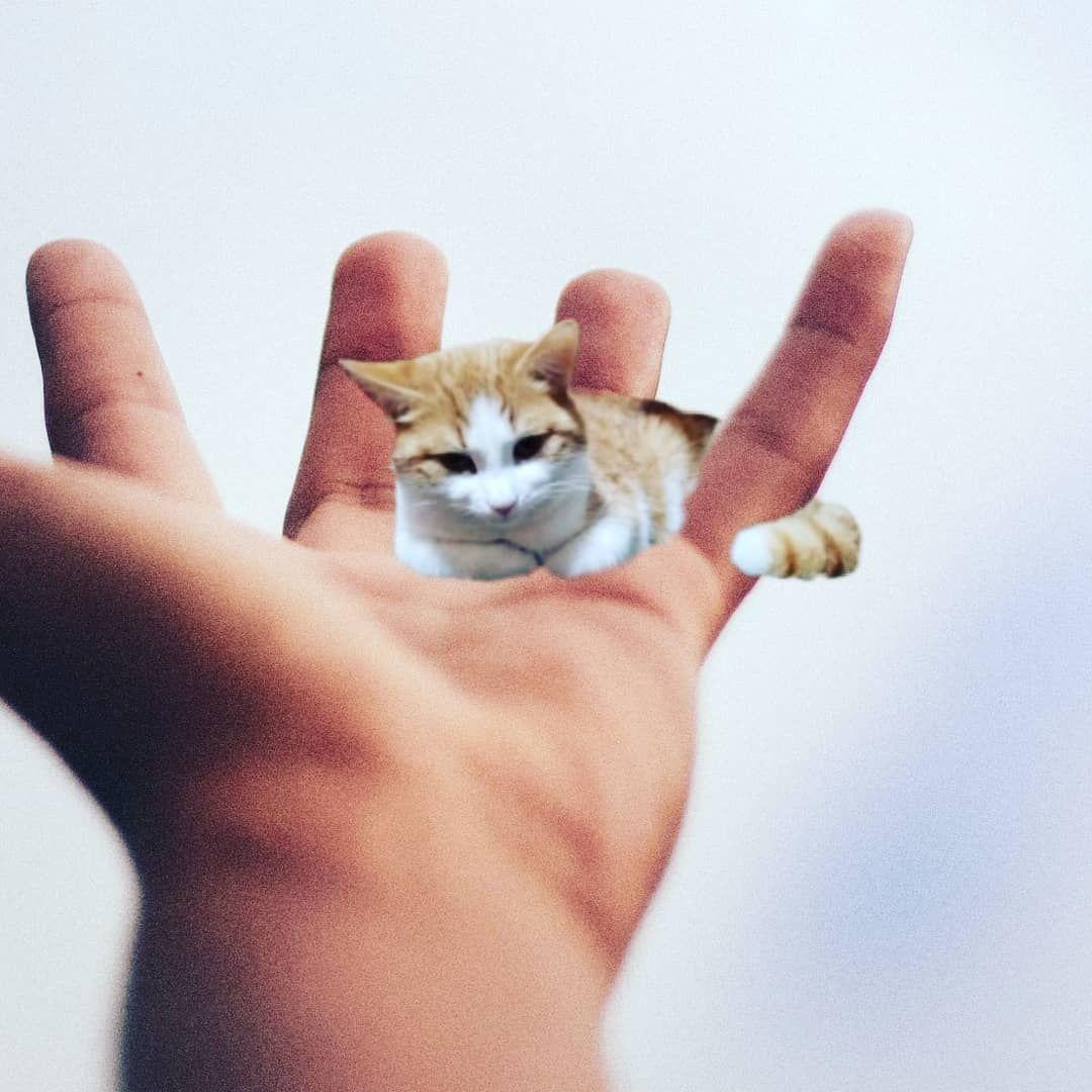 #cat #cats #catsofinstagram #instacat #instagramanet #instatag #catstagram  #catlover #catoftheday #catsagram #catlovers... #dog #dogsofinstagram #dogs #puppy #dogstagram #instadog #pet #doglover #love #dogoftheday #cute #doglovers #instagram #pets #of #puppylove #doggo #puppies #cat #doglife #puppiesofinstagram #ilovemydog #dogsofinsta #animals #hund #doggy #petstagram #k #animal