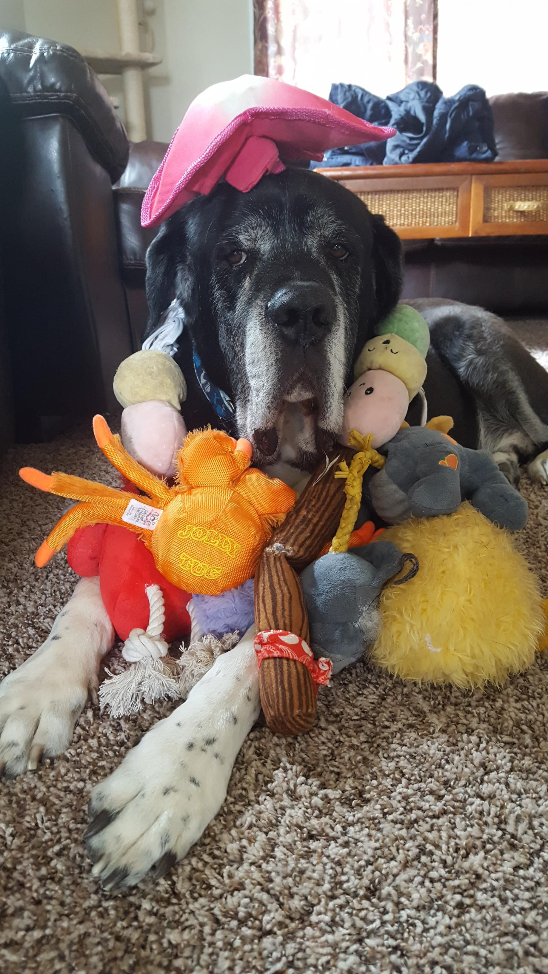 One Of My Dogs Doesn T Like Toys So I Stacked All Of The Other
