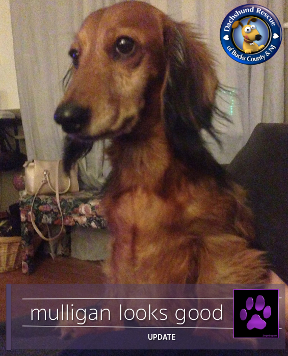 PURPLE PAW UPDATE MULLIGAN 💜💜💜 We have fantastic news