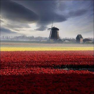 Clube da Lulu: As tulipas do Norte da Holanda