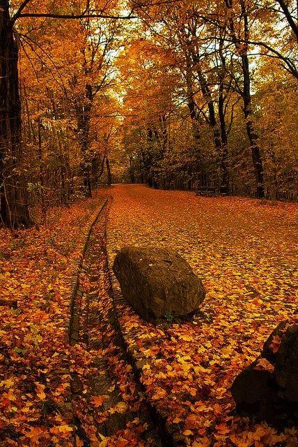 Autumn Forest, Montreal, Canada photo via barbara