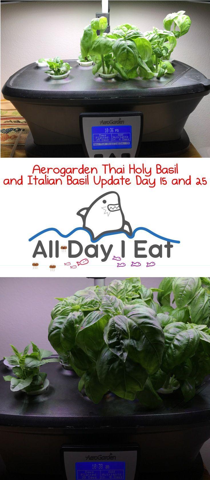 Aerogarden Thai Holy Basil And Italian Basil Update Day 15 400 x 300