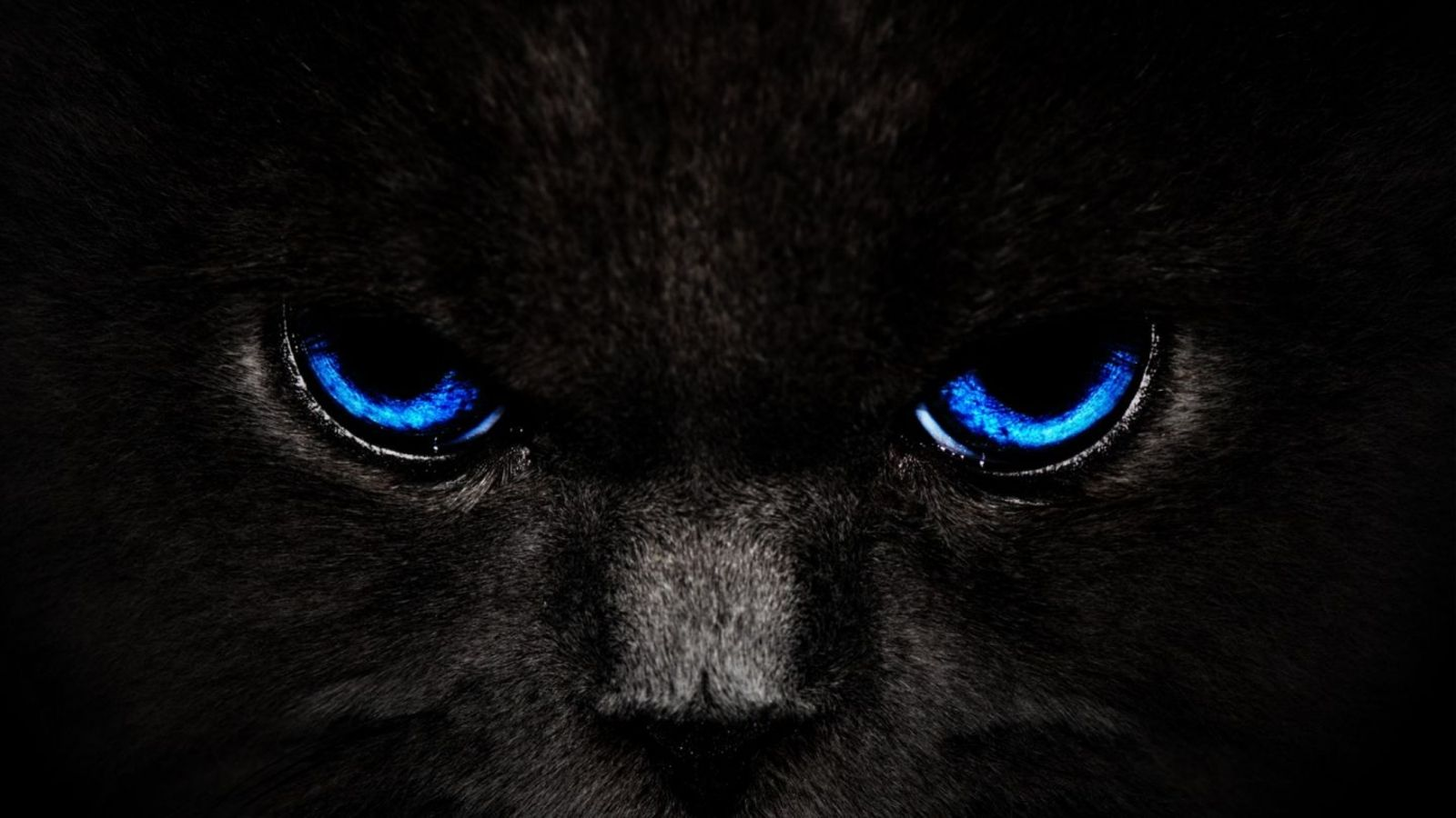 1600x1200 Px Hd Wallpapers Wallpapers Hd Black Cat Blue Eyes