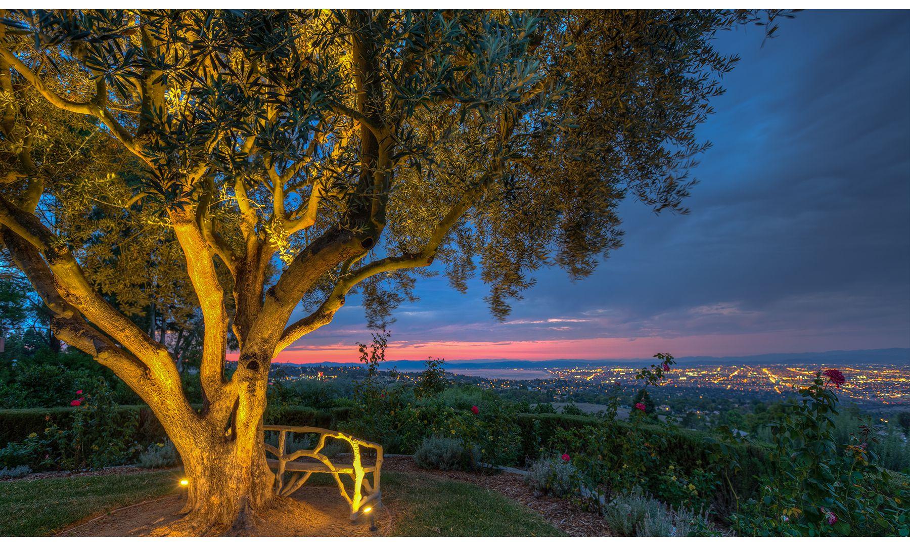 The olive tree at Hacienda de la Paz, a $53 million eight-acre estate built five stories underground in Palos Verdes, California.