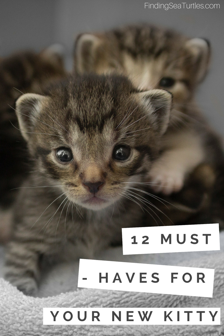 12 Essentials For The First Time Cat Owner Finding Sea Turtles First Time Cat Owner Cats Cat Owners