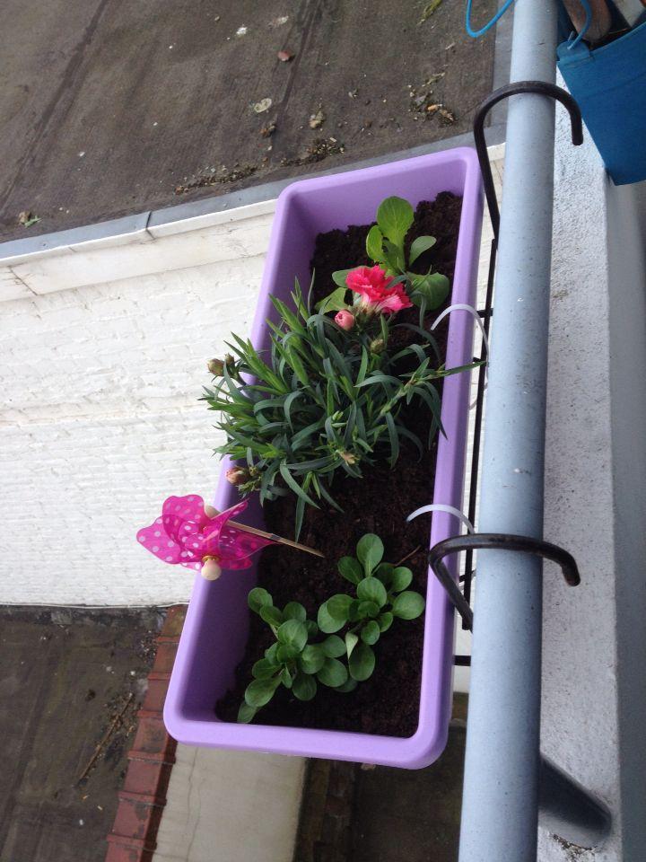 Bacs suspendus  Salades + fleurs
