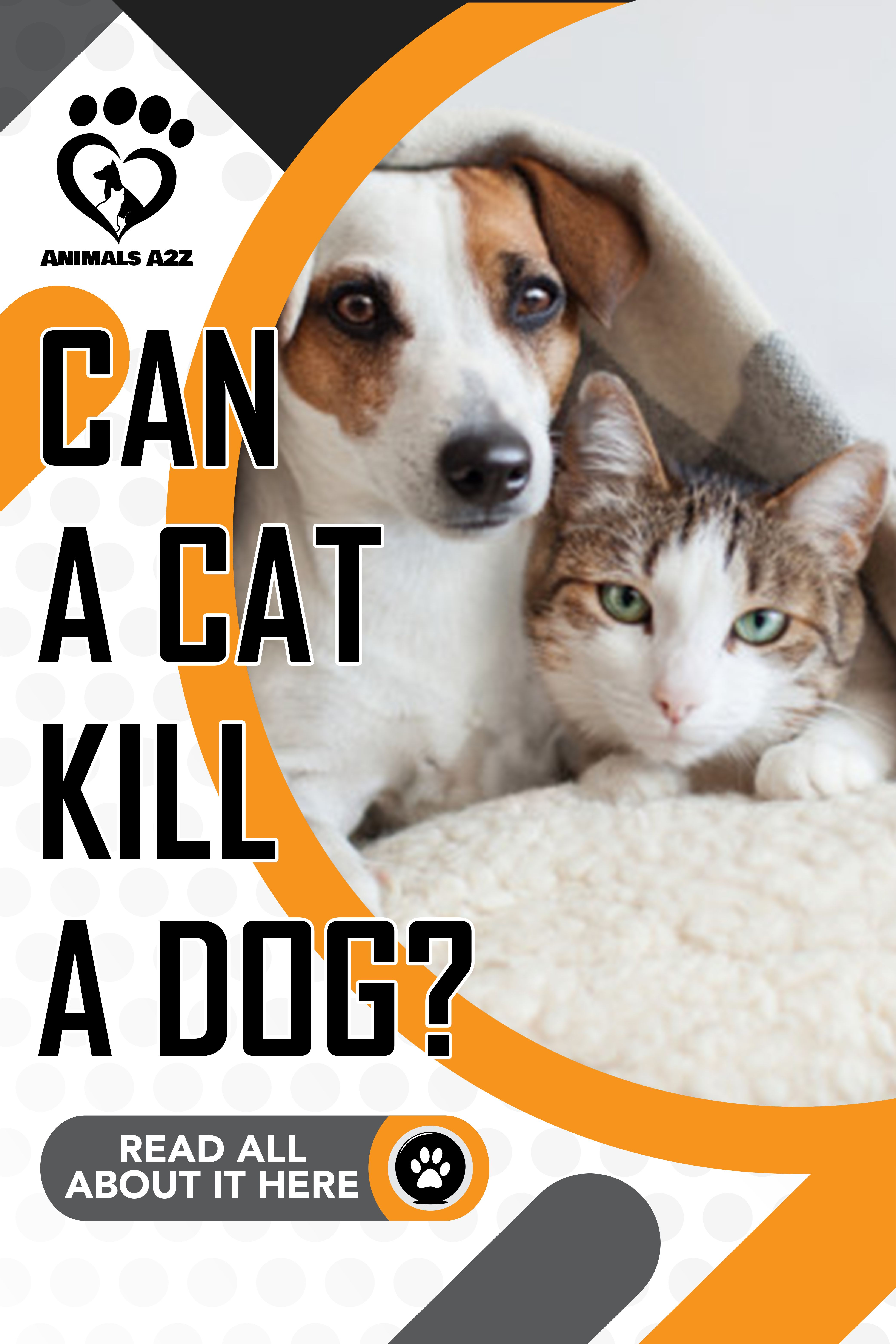 Can A Cat Kill A Dog Cat Facts In 2020 Cat Facts Cat Attacks Dog Cats