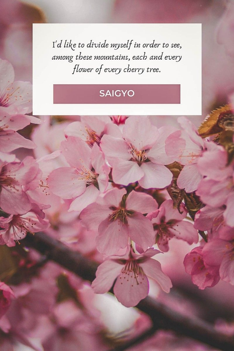 Cherry Blossom Quotes About Life And Renewal In 2021 Cherry Blossom Quotes Blossom Quotes Flower Quotes