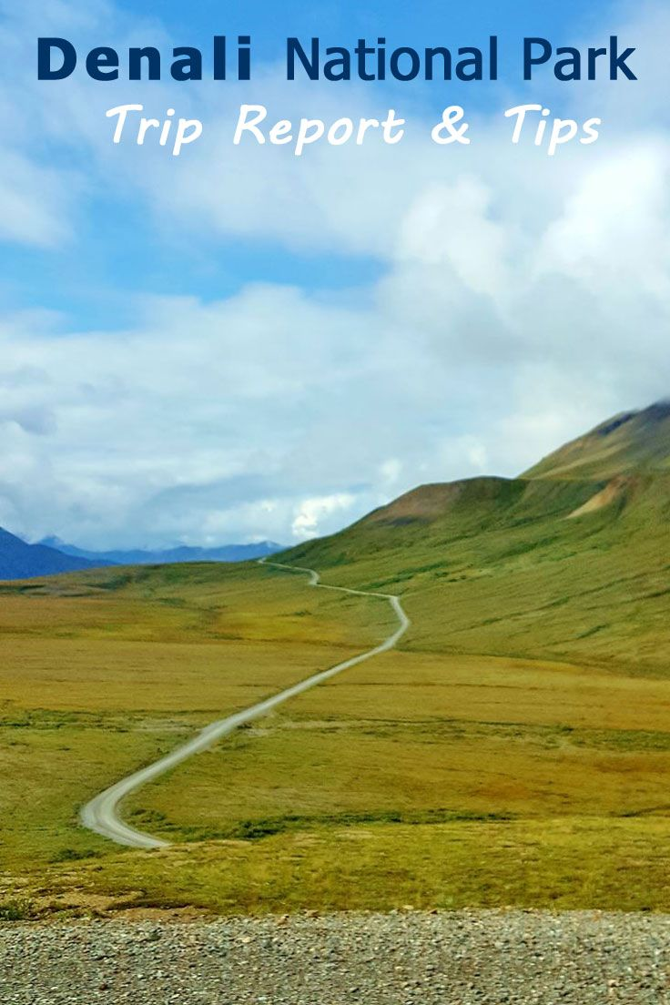 Visiting Denali National Park  Trip Report  Tips  Park And Alaska