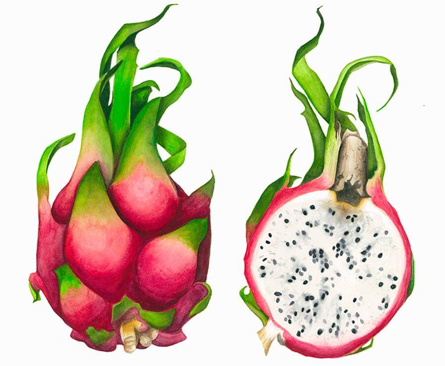 Dragonfruit d yummy o pinterest aquarelles et dessin - Dessins fruits ...