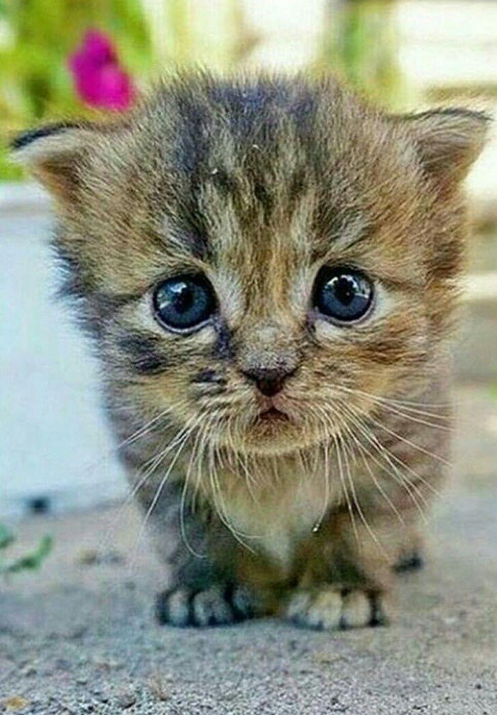 Картинки котиков милых и няшных стиле шебби