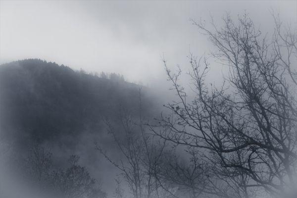 Requiem by The Water Flea , via Behance