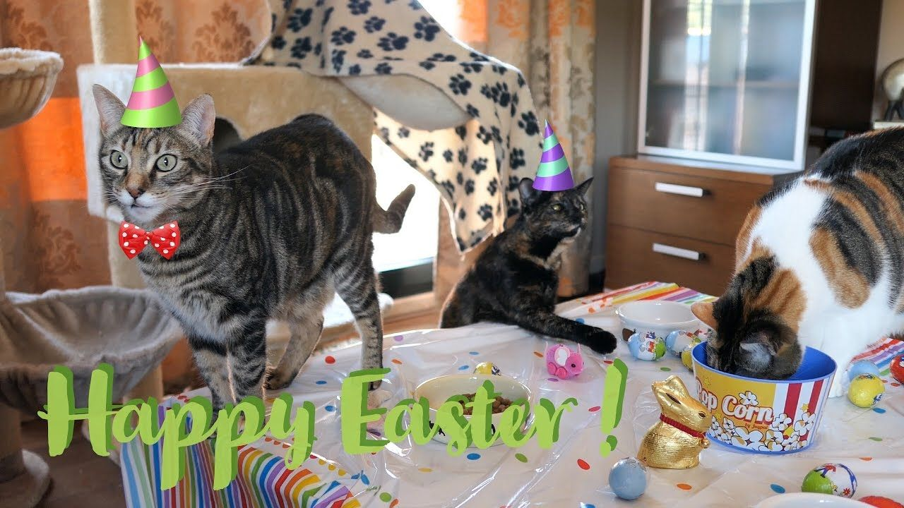 Funny Cats Vlog 33 Happy Easter Party Cute Cat Gif Cats Funny Cats