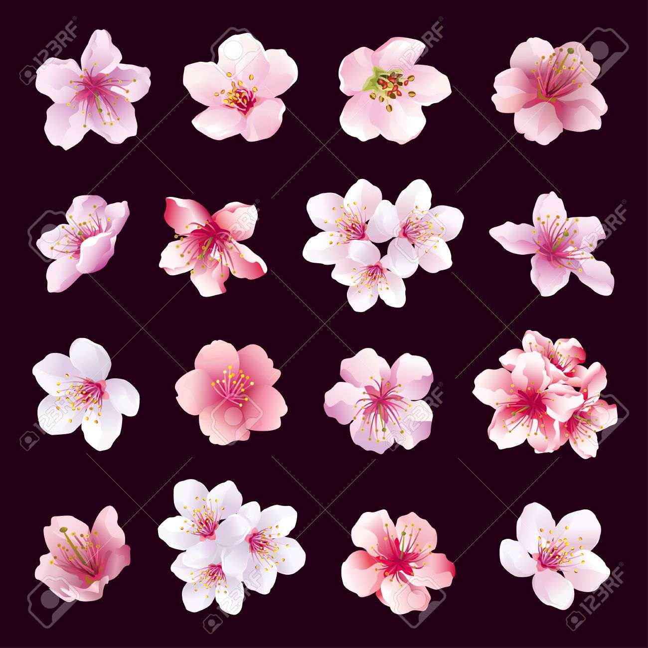 Dessin Fleur Cerisier Ensemble De Differentes Belles Fleurs De