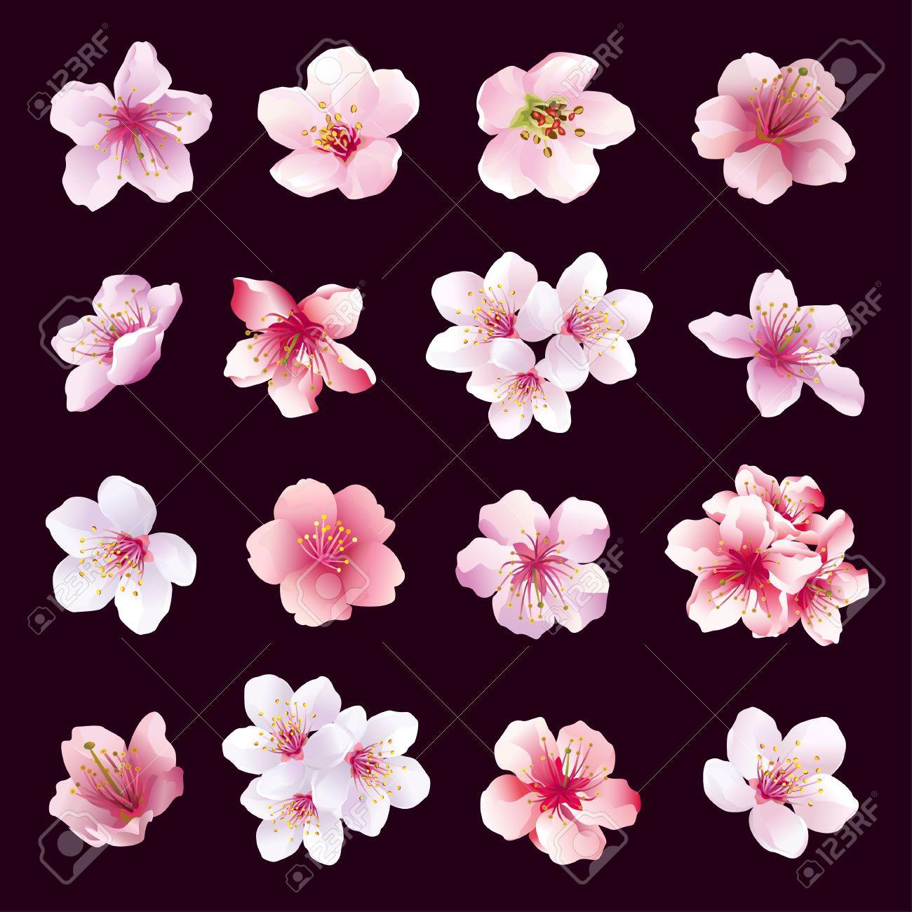 R Sultats Google Recherche D Images Correspondant Http Previews 123rf Com Images Silvionka Silvio Cherry Blossom Art Blossom Tattoo Cherry Blossom Painting