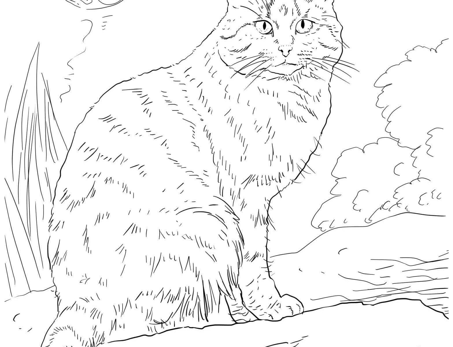 Cat Coloring Pages Printable Awesome 22 Kitty Cat Coloring Pages Printable Collection Coloring Sheets Cat Coloring Page Animal Coloring Pages Dog Coloring Page