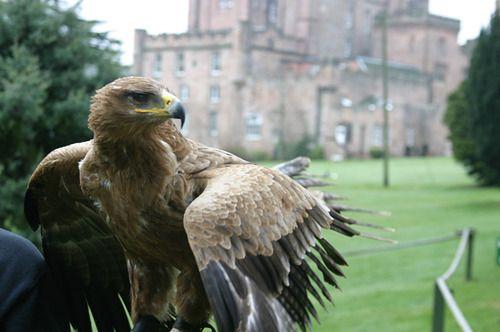 Falconry At Dalhousie Castle Scotland Trip Castles Scottish