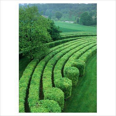 Hedges. Cloosterman's, Belgium. Photo by Jerry Harpur. Via Gap Photos.