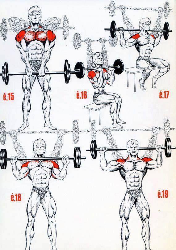 melhor treino para hipertrofia biceps