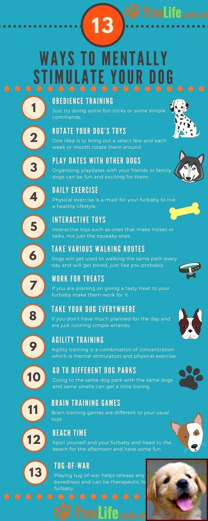 how long does it take to potty train an older dog