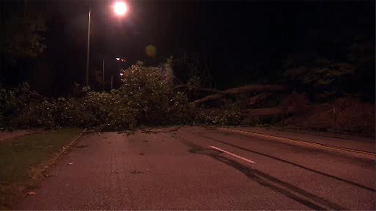 Downed tree shuts down kelly drive in both directions