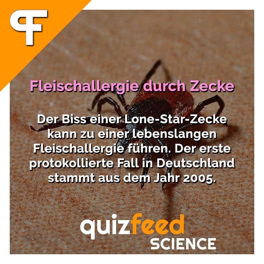 Fleischallergie Zecke