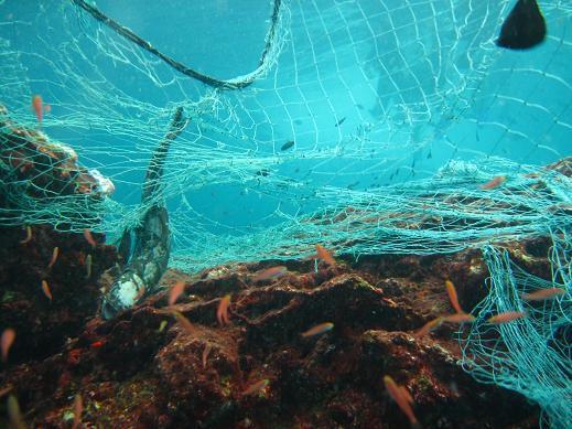 Das schönste Riff, bedeckt von einem riesigen Fischernetz... Das muss weg!