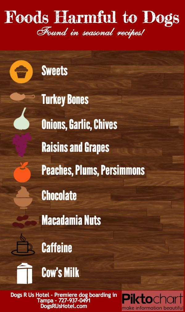 Foods Harmful To Dogs Seasonal Food Chocolate Macadamia Nuts Seasonal Recipes