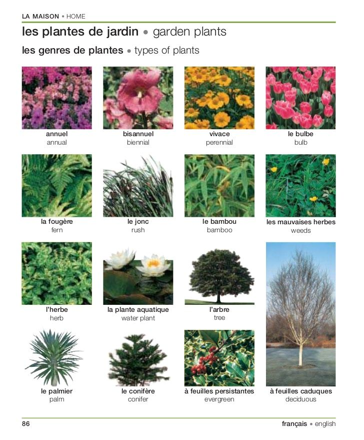 Les Plantes De Jardin Jardins Plante Jardin Bulbes