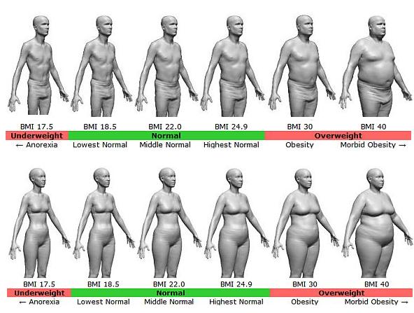 body fat diagram - Google Search