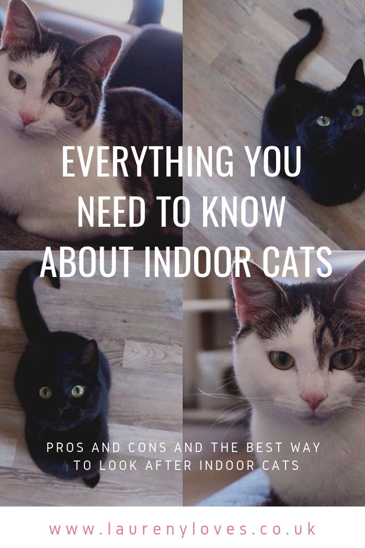 Everything You Need To Know About Indoor Cats Cats Cat Health Outdoor Cats