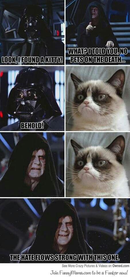 Grunpy Cat Funny Grumpy Cat Memes Grumpy Cat Humor Star Wars Humor
