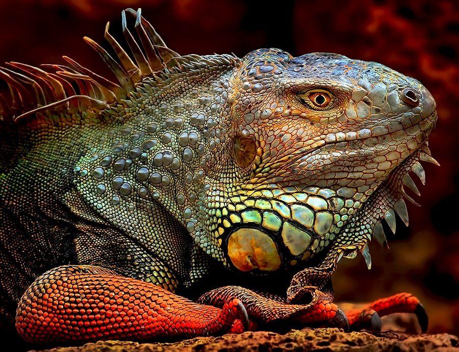 Pin by wong kf on Amphibian Reptile Gastropods Marine & Aquatic ...