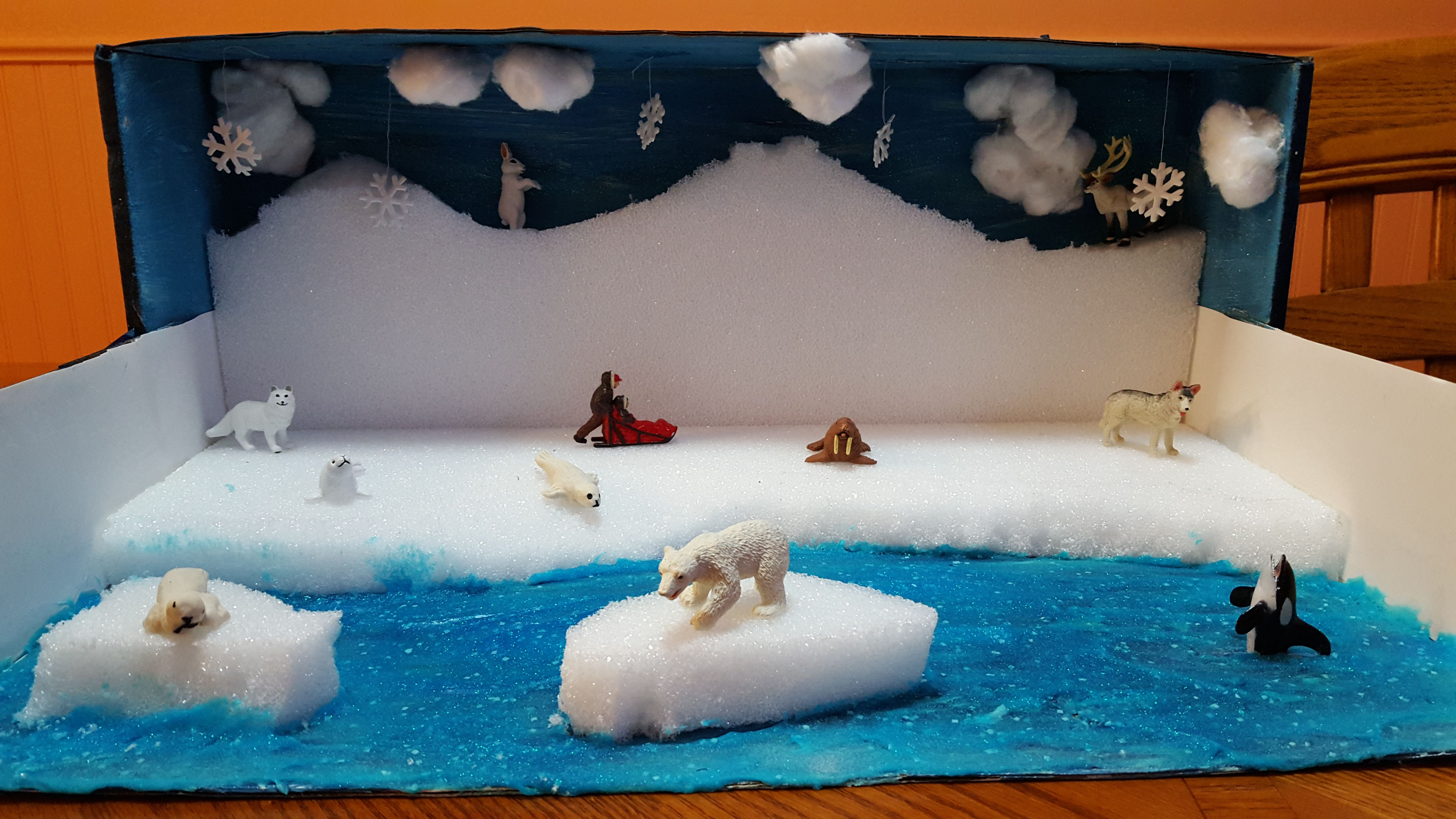 Kids Diorama With Details: Arctic Seal Diorama, Second Grade Project
