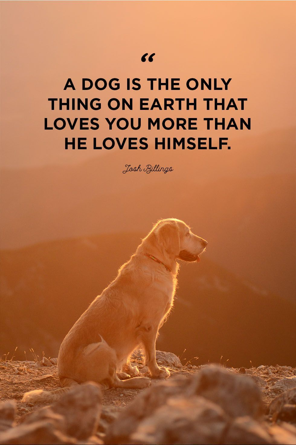 40 Dog Quotes That Will Make Your Heart Melt Citat Om Hundar Hundar Och Djur