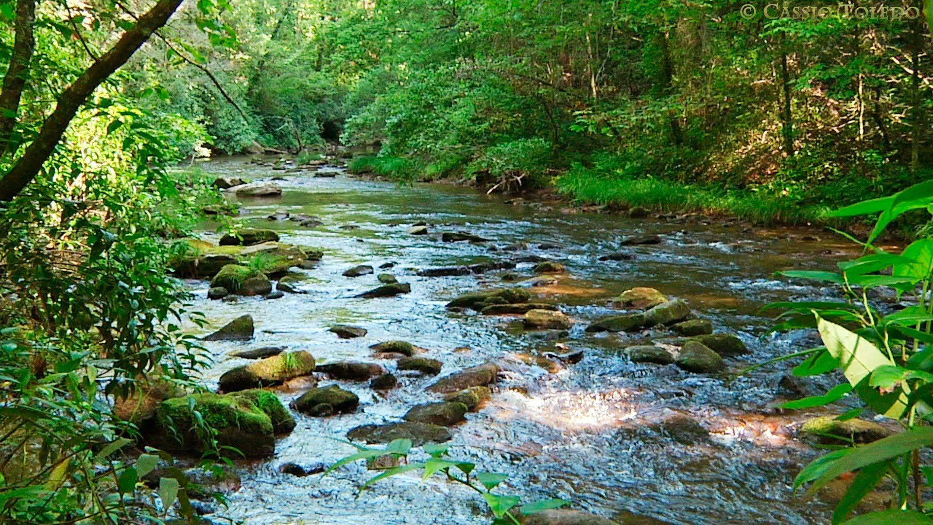 Sonidos Del Bosque Relajarse Sonidos De La Naturaleza Naturaleza Fotos Naturaleza Paisaje Relajantes