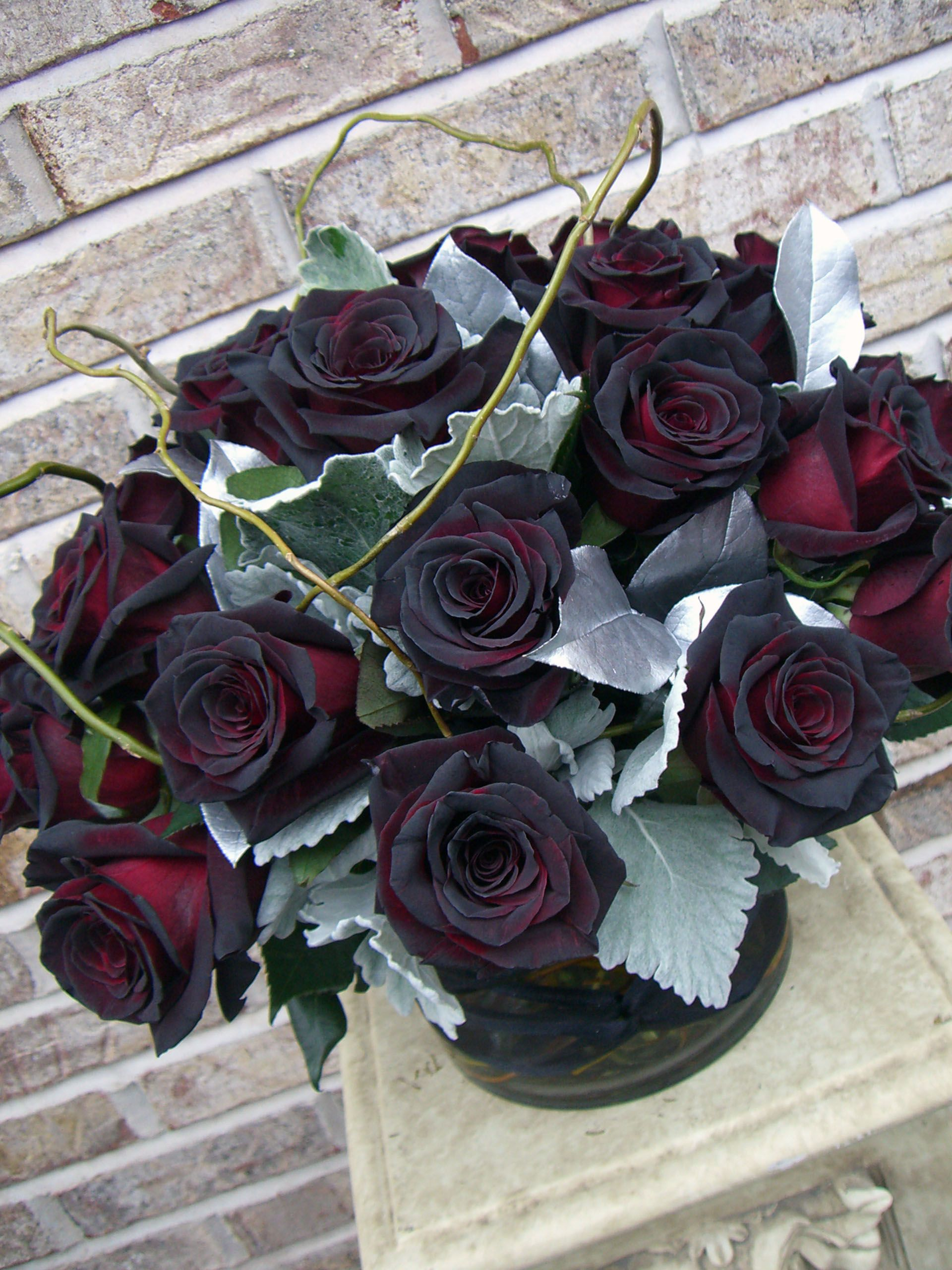 Some Of The Most Beautiful Black Roses I Ve Ever Seen Black