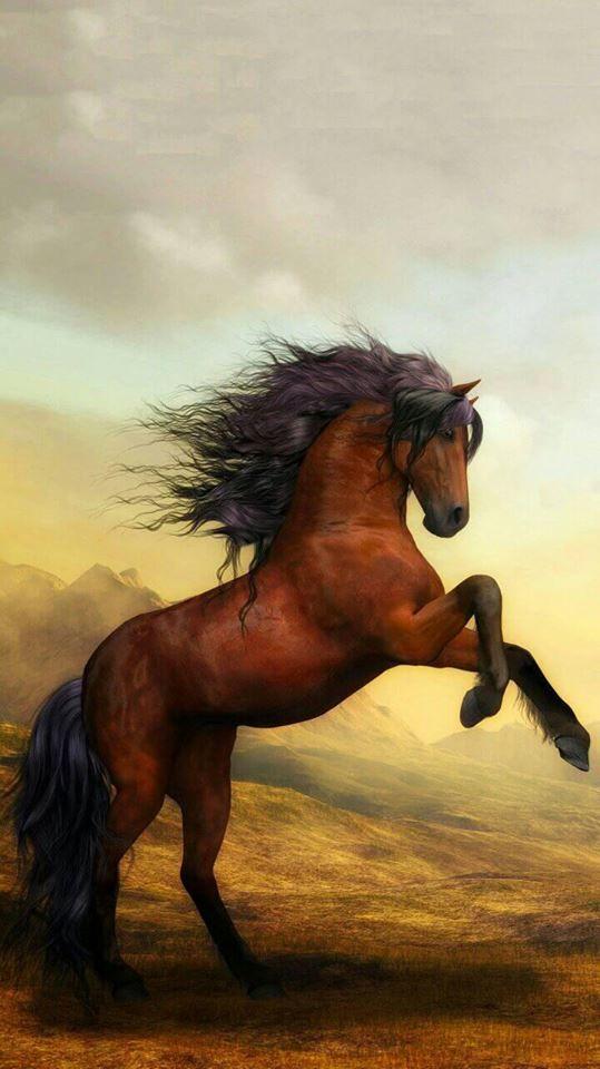 Pretty horse wallpaper iPhoneXSwallpaper iPhoneXR