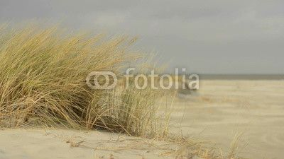 Dune grass waving in the wind on a beautiful winter day.