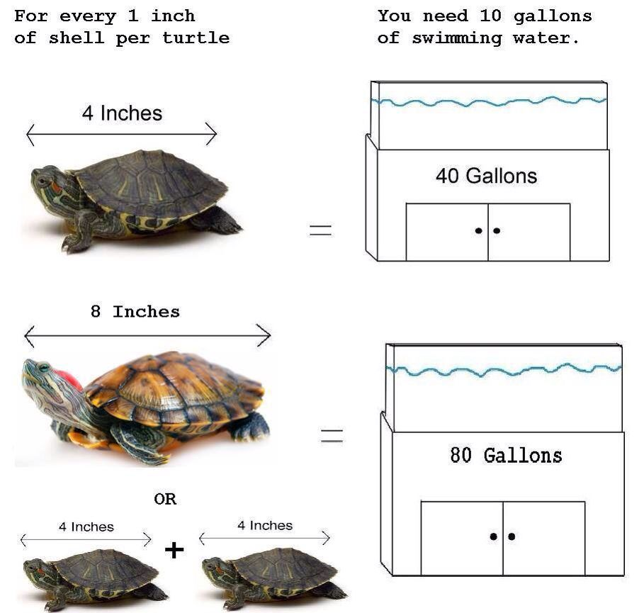 Tank Size For Your Res Pet Turtle Care Turtle Care Pet Turtle