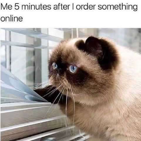 Waiting for online orders is the worst #bbloggers | Funny cat ...