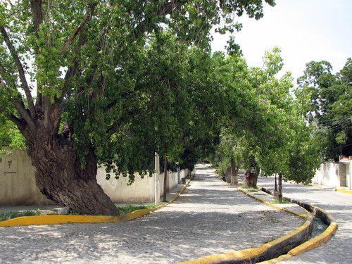 Arteaga Coahuila | Arteaga, Coahuila|Rutas, Mapas, Carreteras|Lugares Turísticos|Fotos y ...